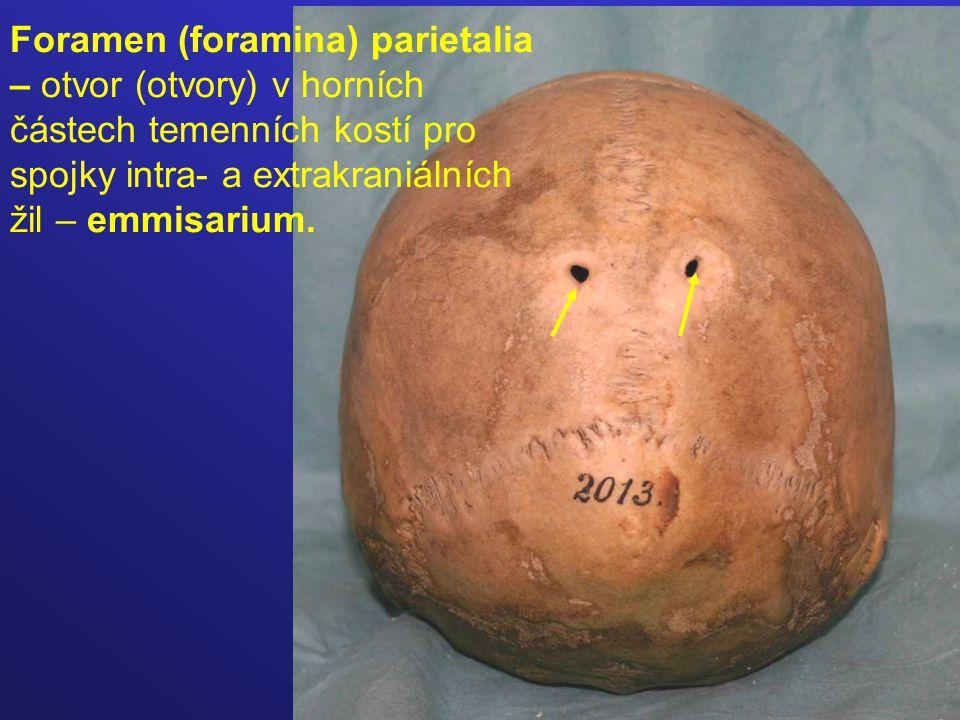 Foramen (foramina) parietalia – otvor (otvory) v horních částech temenních kostí pro spojky intra- a extrakraniálních žil – emmisarium.