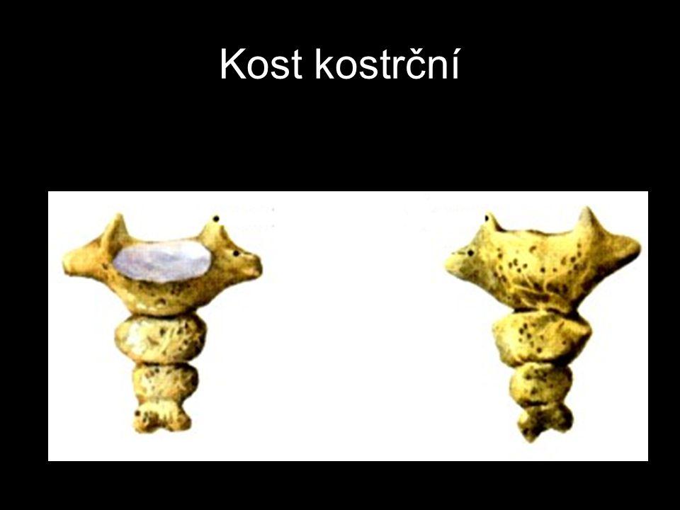 Kost kostrční