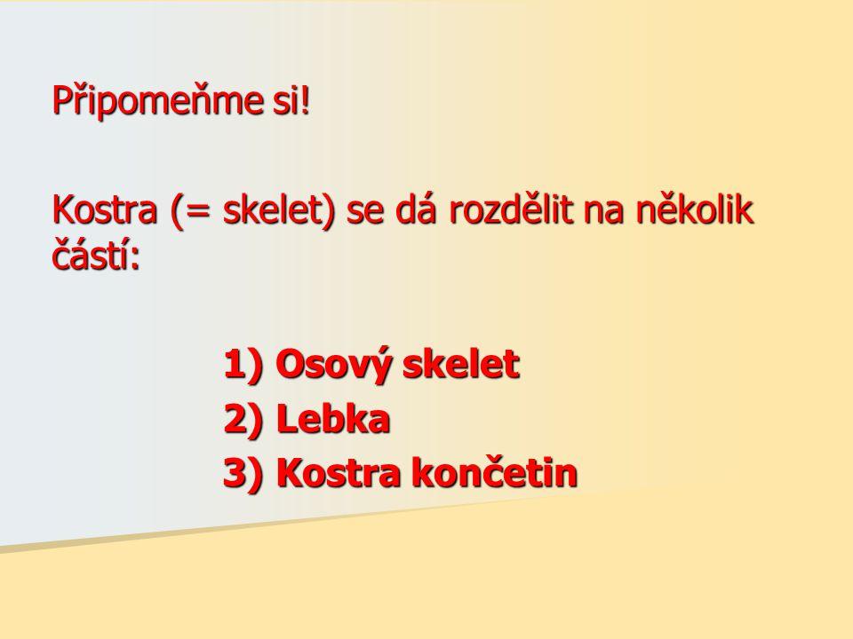 Připomeňme si! Kostra (= skelet) se dá rozdělit na několik částí: 1) Osový skelet 2) Lebka 3) Kostra končetin