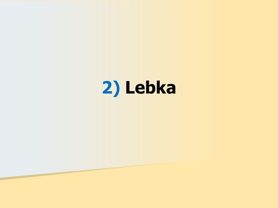 2) Lebka
