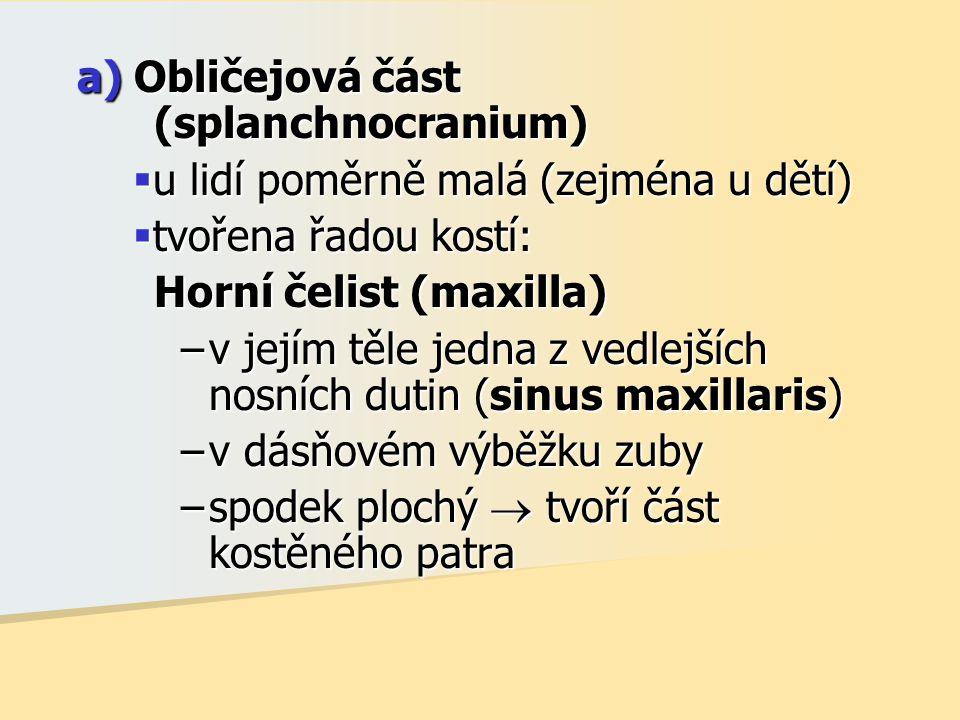 a) Obličejová část (splanchnocranium)  u lidí poměrně malá (zejména u dětí)  tvořena řadou kostí: Horní čelist (maxilla) –v jejím těle jedna z vedlejších nosních dutin (sinus maxillaris) –v dásňovém výběžku zuby –spodek plochý  tvoří část kostěného patra