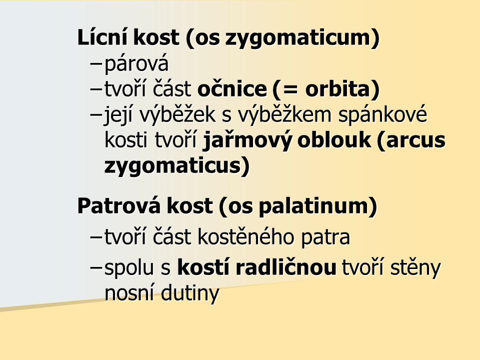Lícní kost (os zygomaticum) –párová –tvoří část očnice (= orbita) –její výběžek s výběžkem spánkové kosti tvoří jařmový oblouk (arcus zygomaticus) Patrová kost (os palatinum) –tvoří část kostěného patra –spolu s kostí radličnou tvoří stěny nosní dutiny