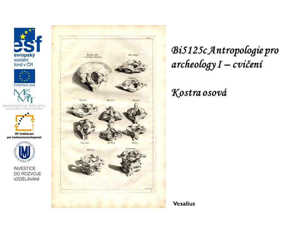 Bi5125c Antropologie pro archeology I – cvičení Kostra osová Vesalius