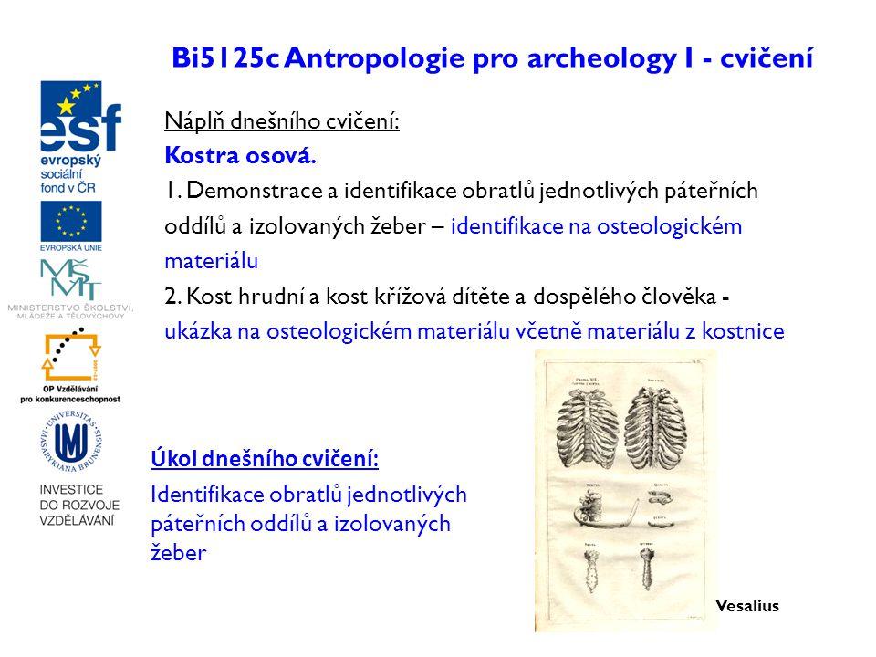 Bi5125c Antropologie pro archeology I - cvičení Náplň dnešního cvičení: Kostra osová. 1. Demonstrace a identifikace obratlů jednotlivých páteřních odd