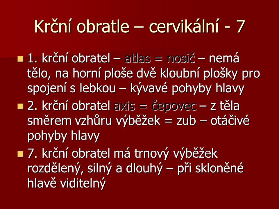 Krční obratle – cervikální - 7 1.
