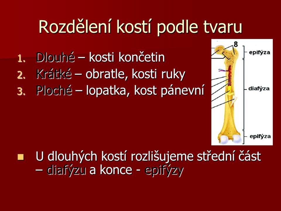 Mozková část lebky Kost klínová = os sphenoidale Z těla vybíhají velká a malá křídla Z těla vybíhají velká a malá křídla Uprostřed klínové kosti je turecké sedlo – uložena hypofýza Uprostřed klínové kosti je turecké sedlo – uložena hypofýza Tělo kosti klínové je duté, spojené s dutinou nosní – patří do vedlejších nosních dutin Tělo kosti klínové je duté, spojené s dutinou nosní – patří do vedlejších nosních dutin
