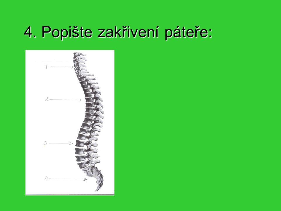 5.Která část kostry se na obrázku nachází.
