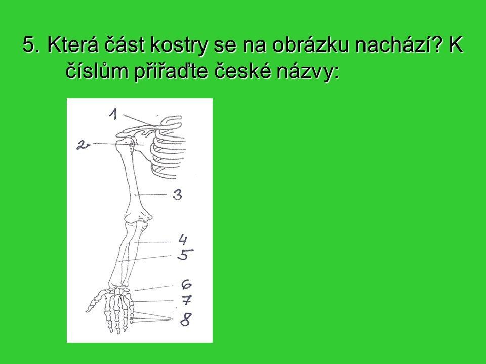 6.Která část kostry se na obrázku nachází.