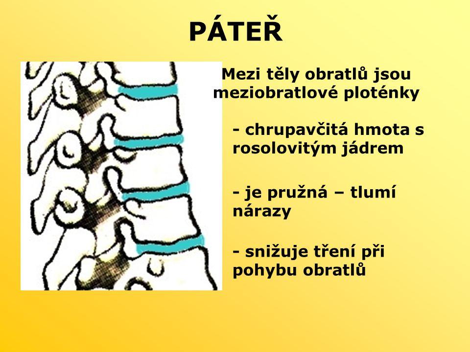 PÁTEŘ Mezi těly obratlů jsou meziobratlové ploténky - chrupavčitá hmota s rosolovitým jádrem - je pružná – tlumí nárazy - snižuje tření při pohybu obratlů