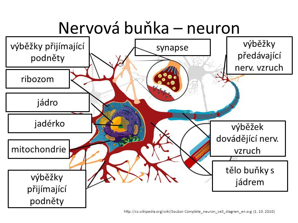 Nervová buňka – neuron http://cs.wikipedia.org/wiki/Soubor:Complete_neuron_cell_diagram_en.svg (1.