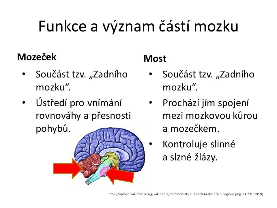 """Funkce a význam částí mozku Mozeček Součást tzv.""""Zadního mozku ."""