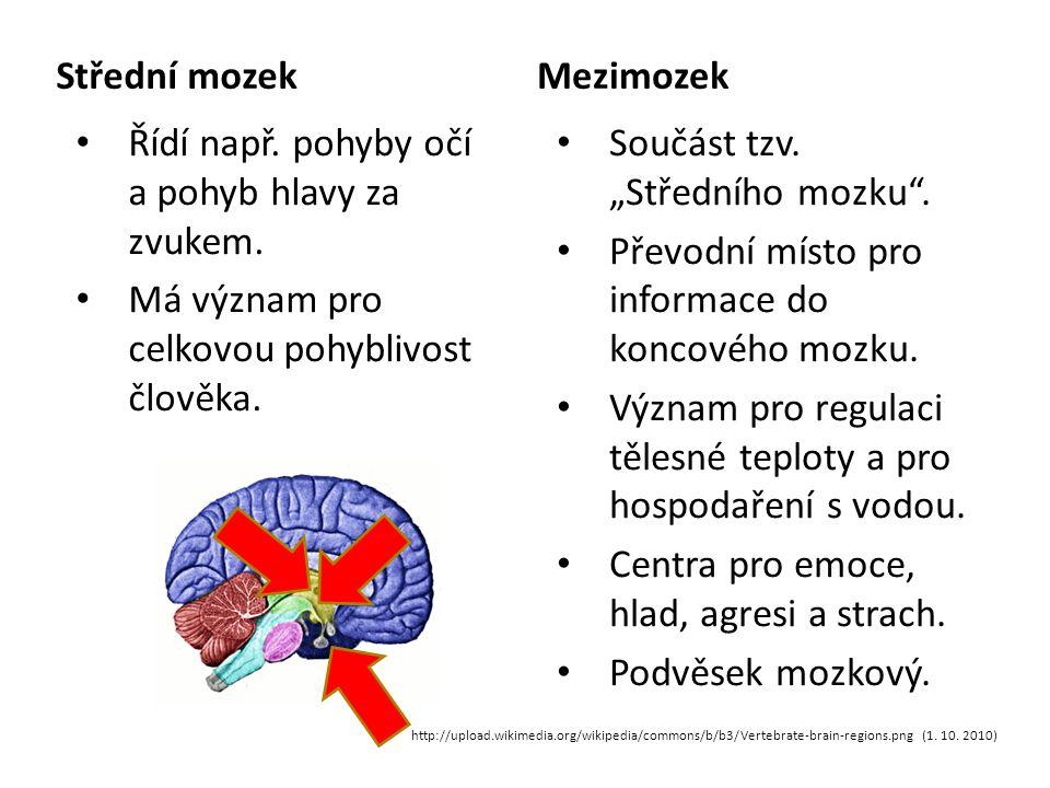 Střední mozek Řídí např.pohyby očí a pohyb hlavy za zvukem.