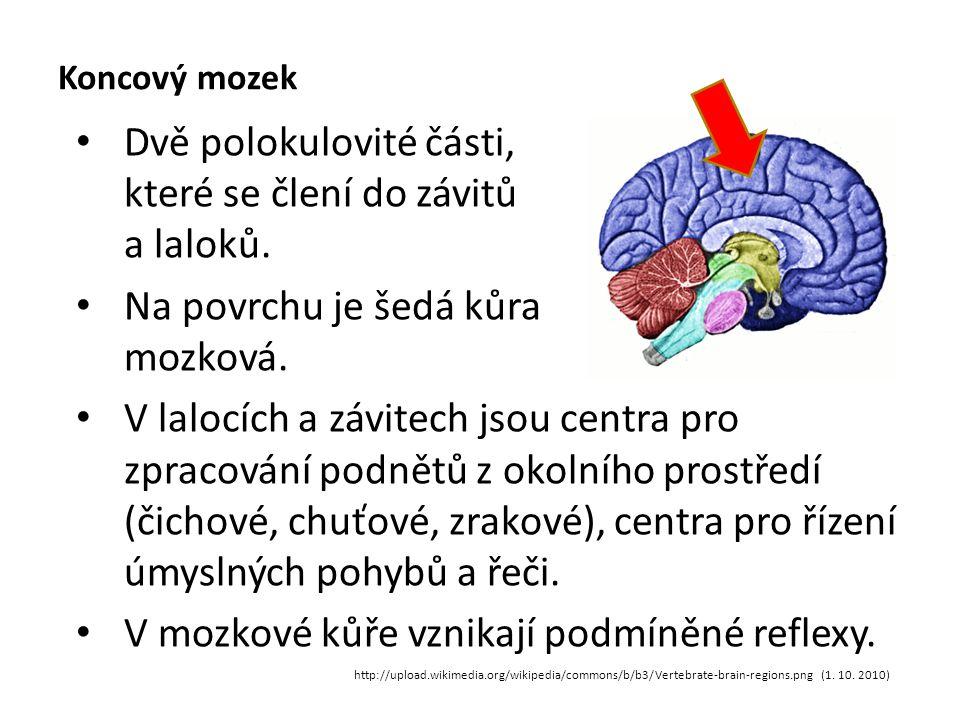 Koncový mozek Dvě polokulovité části, které se člení do závitů a laloků.