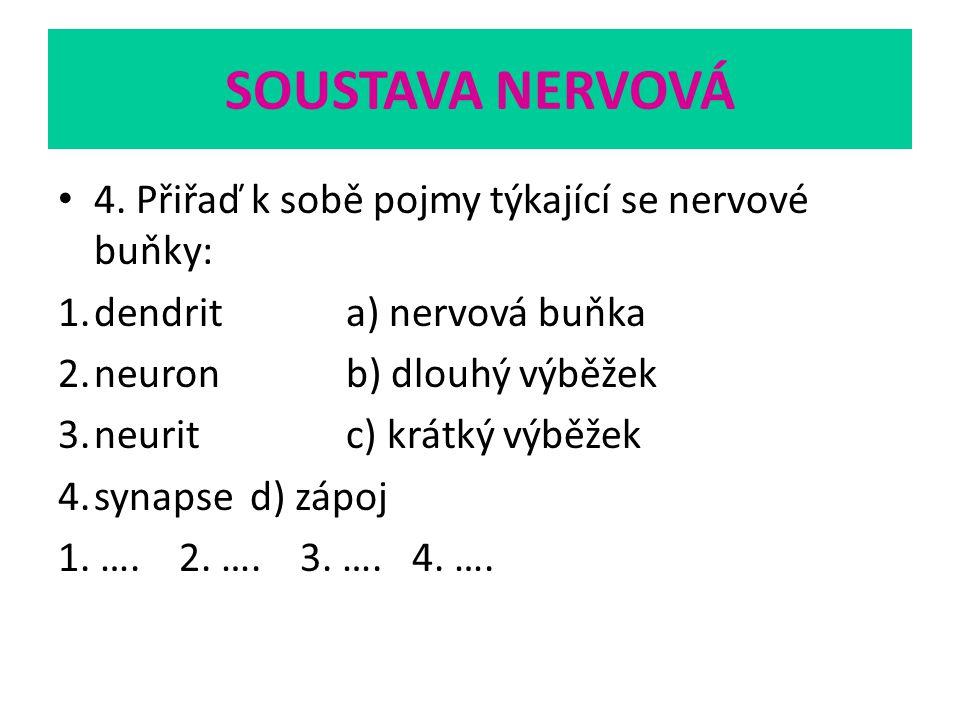 SOUSTAVA NERVOVÁ 4. Přiřaď k sobě pojmy týkající se nervové buňky: 1.dendrita) nervová buňka 2.neuronb) dlouhý výběžek 3.neuritc) krátký výběžek 4.syn