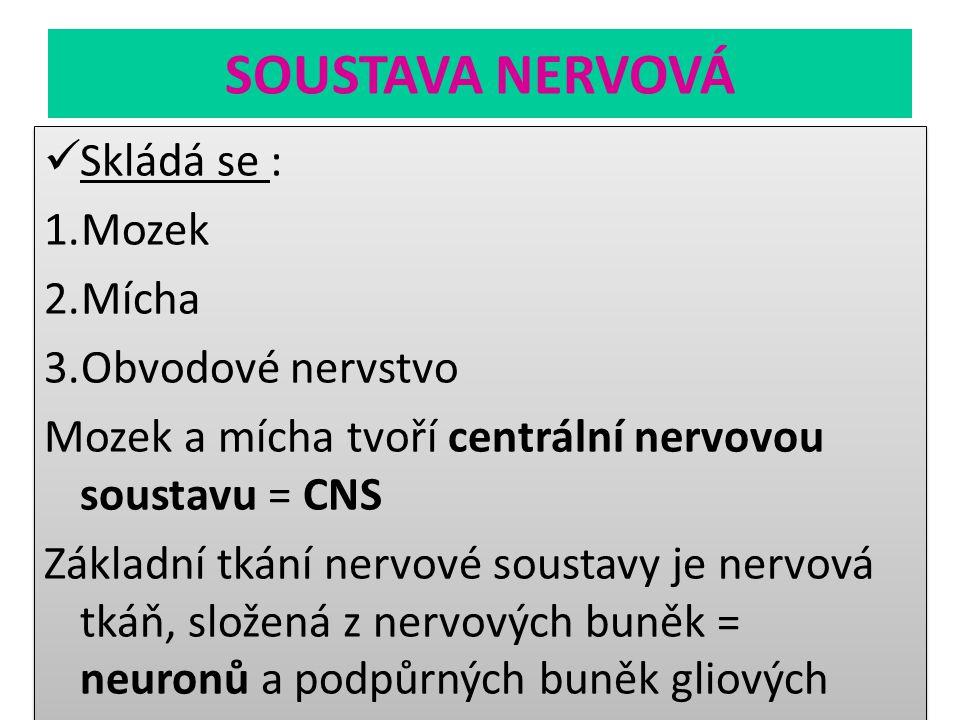 SOUSTAVA NERVOVÁ Skládá se : 1.Mozek 2.Mícha 3.Obvodové nervstvo Mozek a mícha tvoří centrální nervovou soustavu = CNS Základní tkání nervové soustavy
