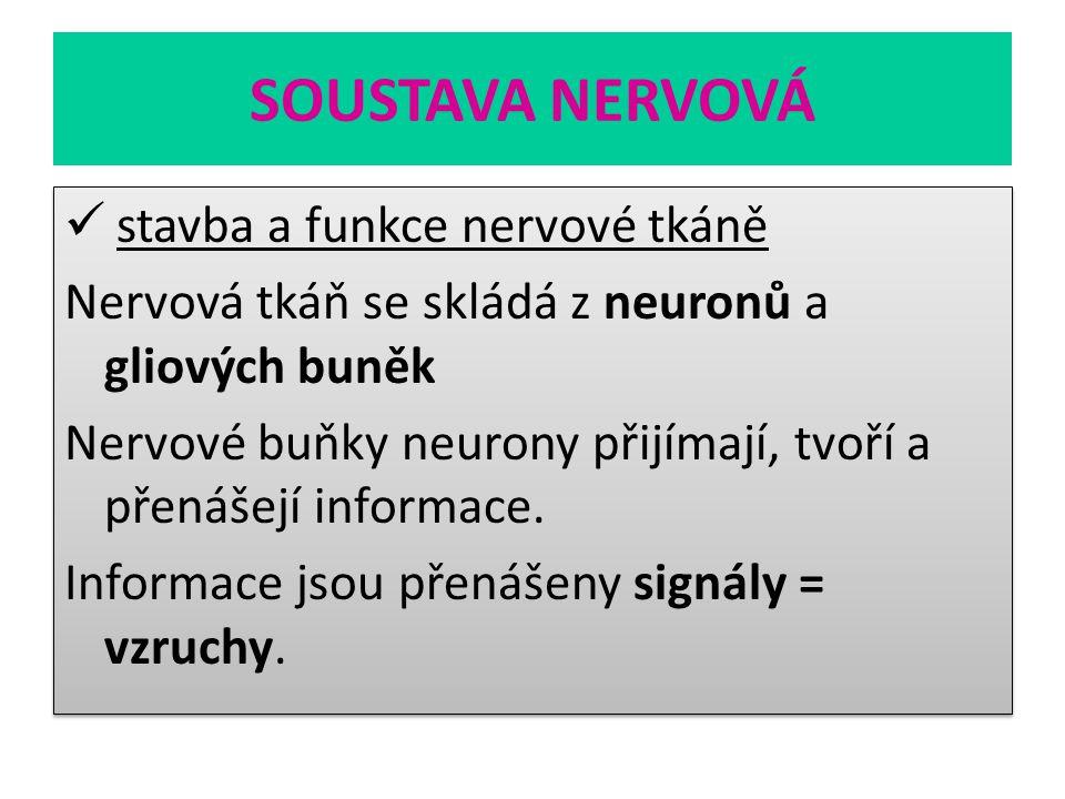 SOUSTAVA NERVOVÁ stavba a funkce nervové tkáně Nervová tkáň se skládá z neuronů a gliových buněk Nervové buňky neurony přijímají, tvoří a přenášejí in