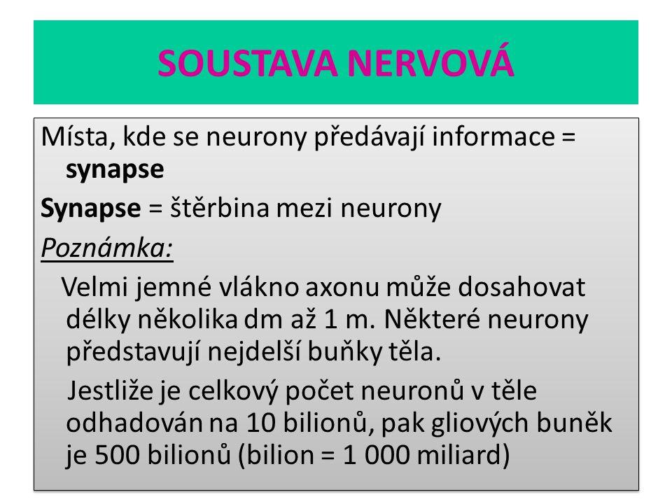 SOUSTAVA NERVOVÁ Místa, kde se neurony předávají informace = synapse Synapse = štěrbina mezi neurony Poznámka: Velmi jemné vlákno axonu může dosahovat
