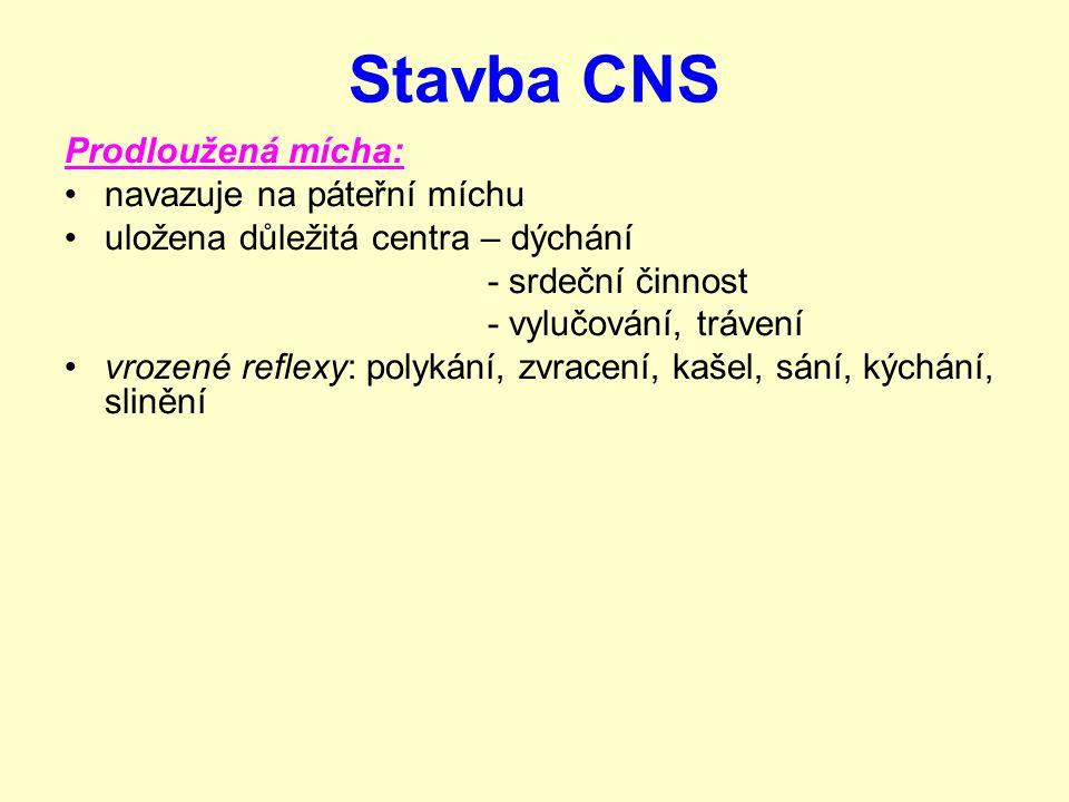 Stavba CNS Prodloužená mícha: navazuje na páteřní míchu uložena důležitá centra – dýchání - srdeční činnost - vylučování, trávení vrozené reflexy: pol