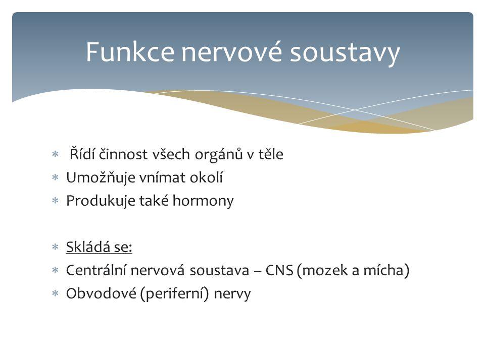  Řídí činnost všech orgánů v těle  Umožňuje vnímat okolí  Produkuje také hormony  Skládá se:  Centrální nervová soustava – CNS (mozek a mícha)  Obvodové (periferní) nervy Funkce nervové soustavy