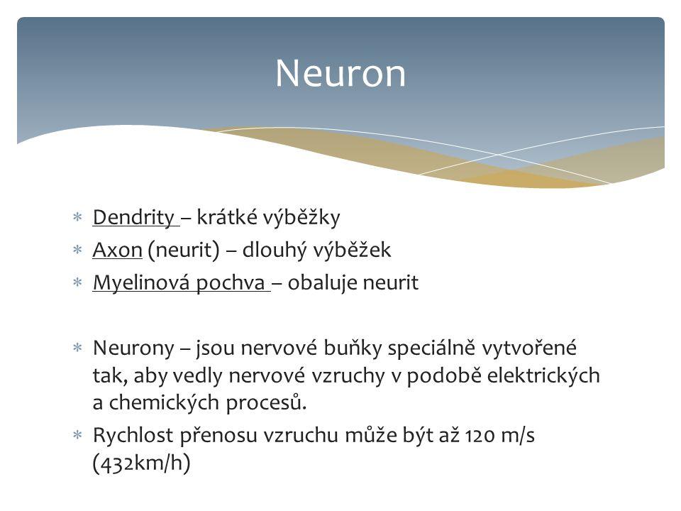  Dendrity – krátké výběžky  Axon (neurit) – dlouhý výběžek  Myelinová pochva – obaluje neurit  Neurony – jsou nervové buňky speciálně vytvořené tak, aby vedly nervové vzruchy v podobě elektrických a chemických procesů.