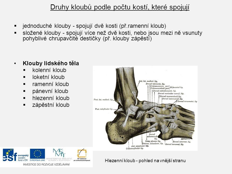 Druhy kloubů podle počtu kostí, které spojují  jednoduché klouby - spojují dvě kosti (př.ramenní kloub)  složené klouby - spojují více než dvě kosti