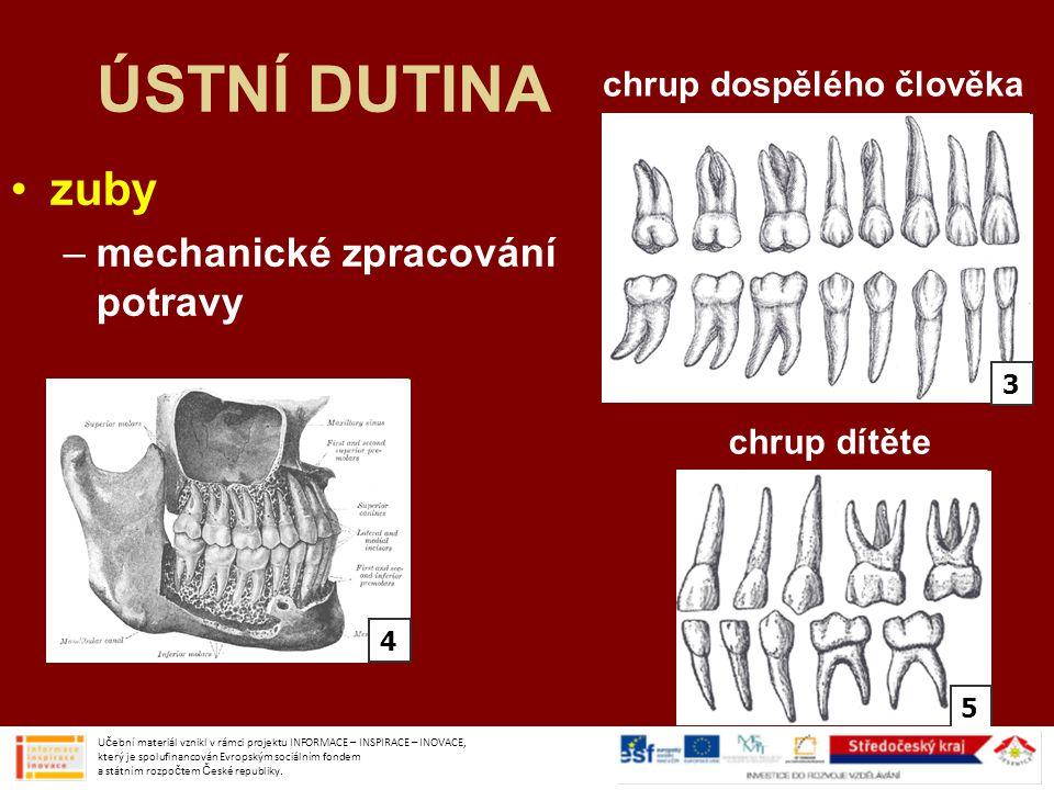 ÚSTNÍ DUTINA zuby –mechanické zpracování potravy Učební materiál vznikl v rámci projektu INFORMACE – INSPIRACE – INOVACE, který je spolufinancován Evr