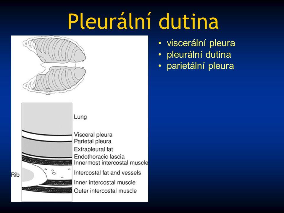 Pleurální dutina viscerální pleura pleurální dutina parietální pleura