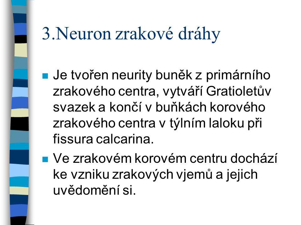 3.Neuron zrakové dráhy n Je tvořen neurity buněk z primárního zrakového centra, vytváří Gratioletův svazek a končí v buňkách korového zrakového centra v týlním laloku při fissura calcarina.