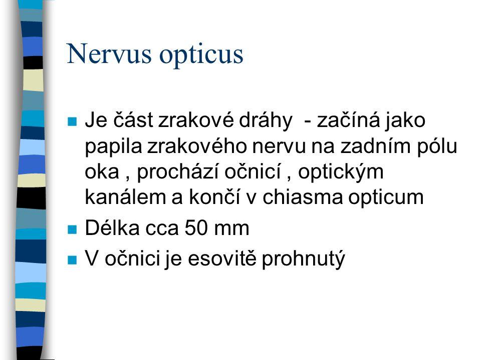 Nervus opticus n Je část zrakové dráhy - začíná jako papila zrakového nervu na zadním pólu oka, prochází očnicí, optickým kanálem a končí v chiasma op