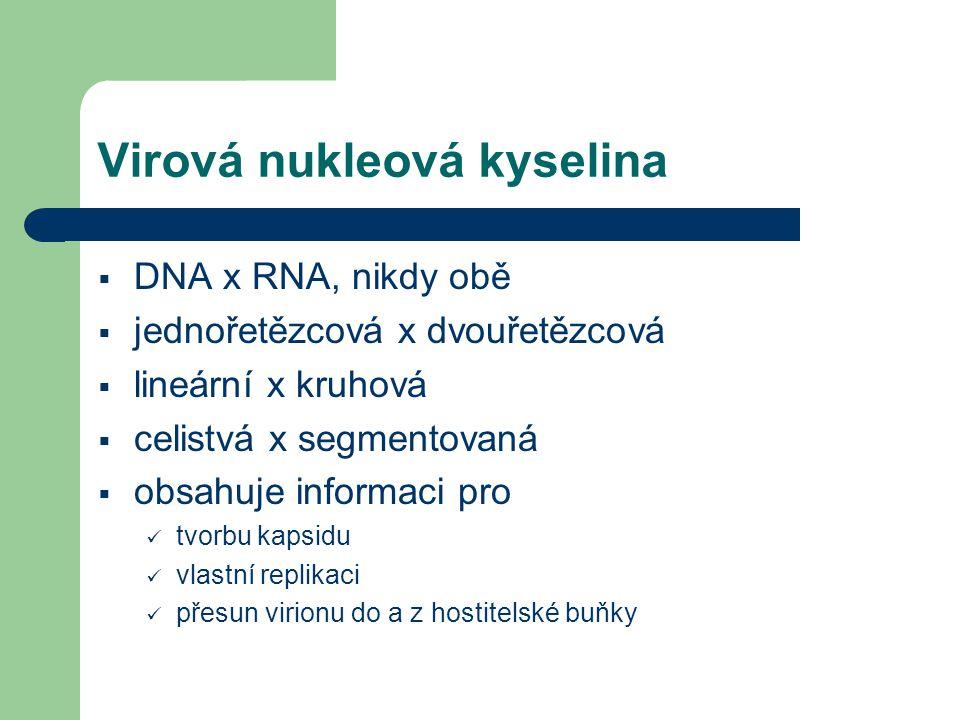 Virová nukleová kyselina  DNA x RNA, nikdy obě  jednořetězcová x dvouřetězcová  lineární x kruhová  celistvá x segmentovaná  obsahuje informaci p