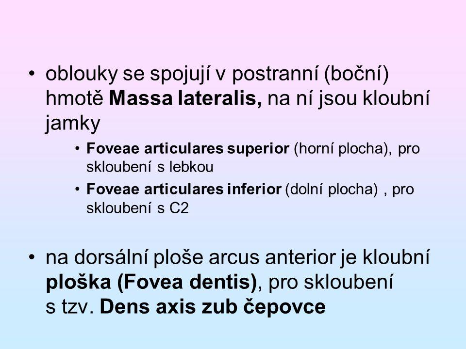 oblouky se spojují v postranní (boční) hmotě Massa lateralis, na ní jsou kloubní jamky Foveae articulares superior (horní plocha), pro skloubení s leb
