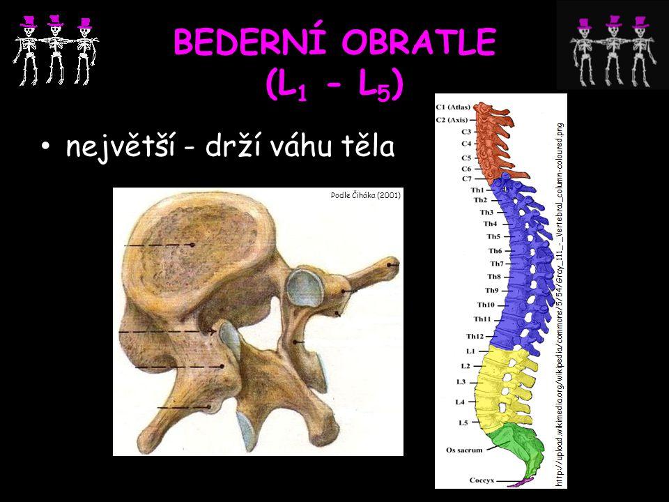 BEDERNÍ OBRATLE (L 1 - L 5 ) největší - drží váhu těla Podle Čiháka (2001)