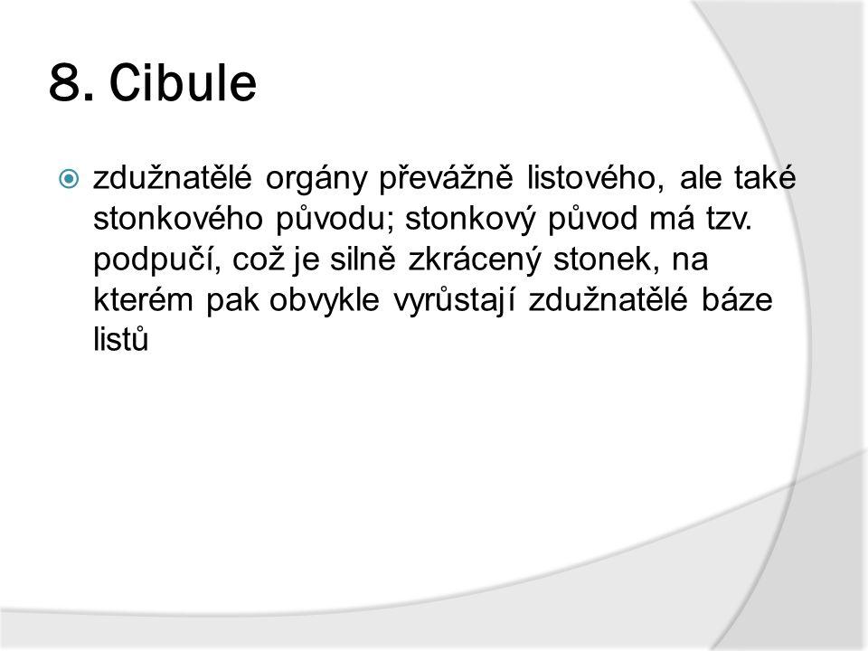8. Cibule  zdužnatělé orgány převážně listového, ale také stonkového původu; stonkový původ má tzv. podpučí, což je silně zkrácený stonek, na kterém