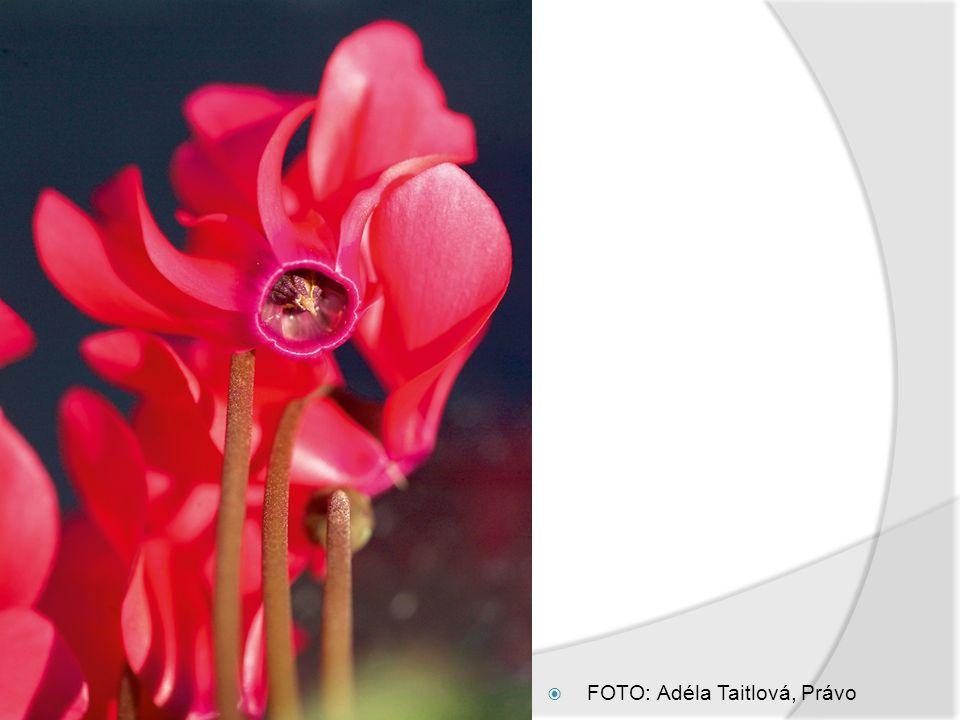 5.Oddenky  Oddenek je zásobní část rostliny vzniklá přeměnou stonku – tzv.