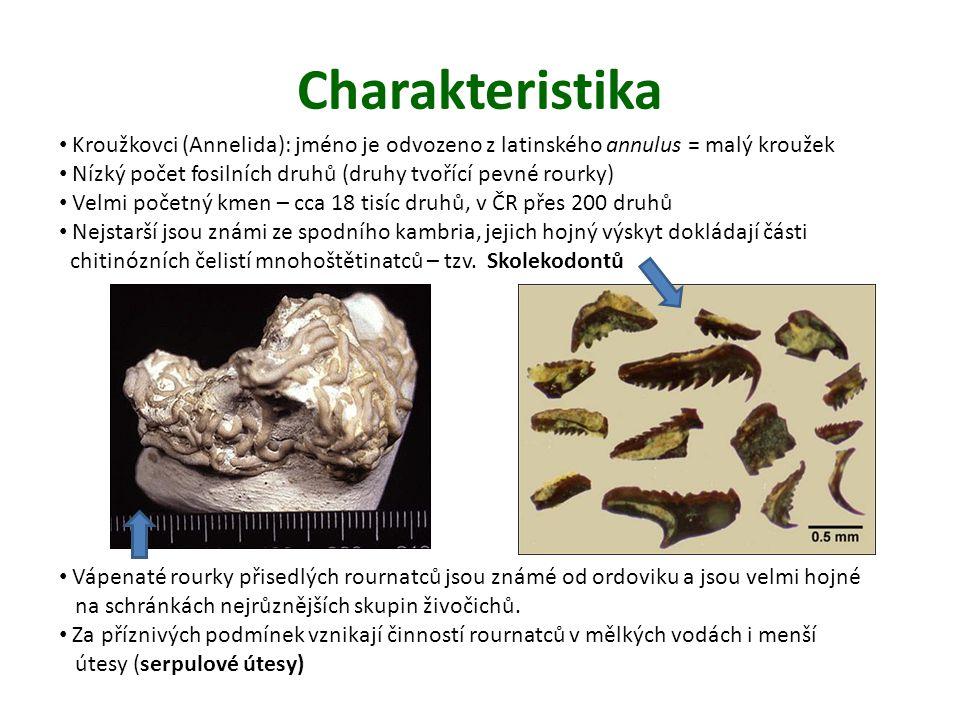 Charakteristika Kroužkovci (Annelida): jméno je odvozeno z latinského annulus = malý kroužek Nízký počet fosilních druhů (druhy tvořící pevné rourky) Velmi početný kmen – cca 18 tisíc druhů, v ČR přes 200 druhů Nejstarší jsou známi ze spodního kambria, jejich hojný výskyt dokládají části chitinózních čelistí mnohoštětinatců – tzv.