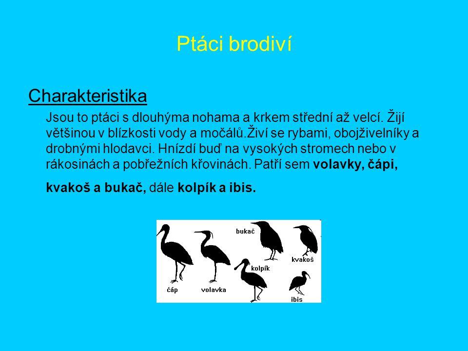 Ptáci brodiví Charakteristika Jsou to ptáci s dlouhýma nohama a krkem střední až velcí. Žijí většinou v blízkosti vody a močálů.Živí se rybami, obojži