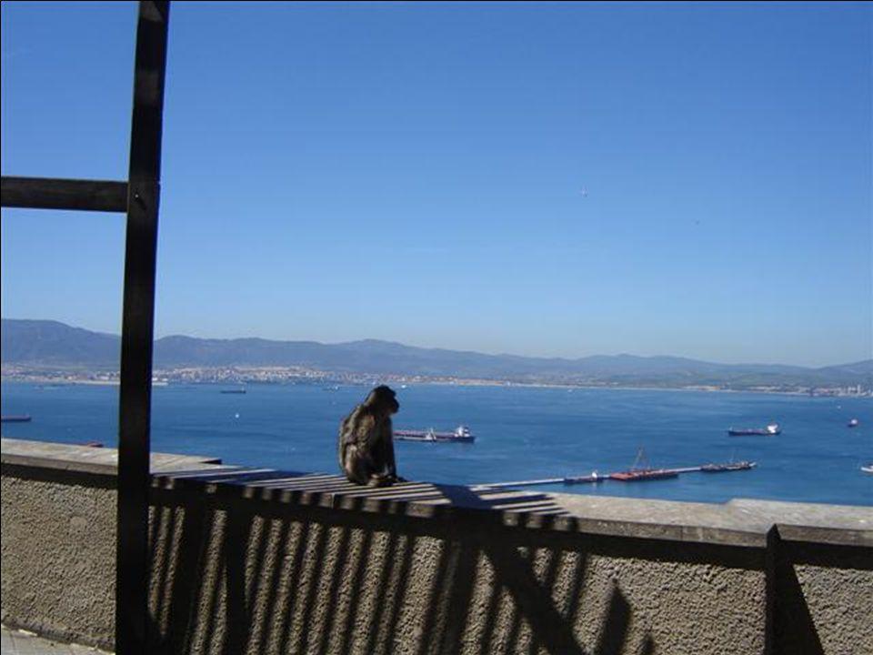 Gibraltar je území, kde Britové mohou vládnout, ale podle opičích pravidel. Legenda praví, že pokud opice budou pobývat na Skále, zůstane území Gibral