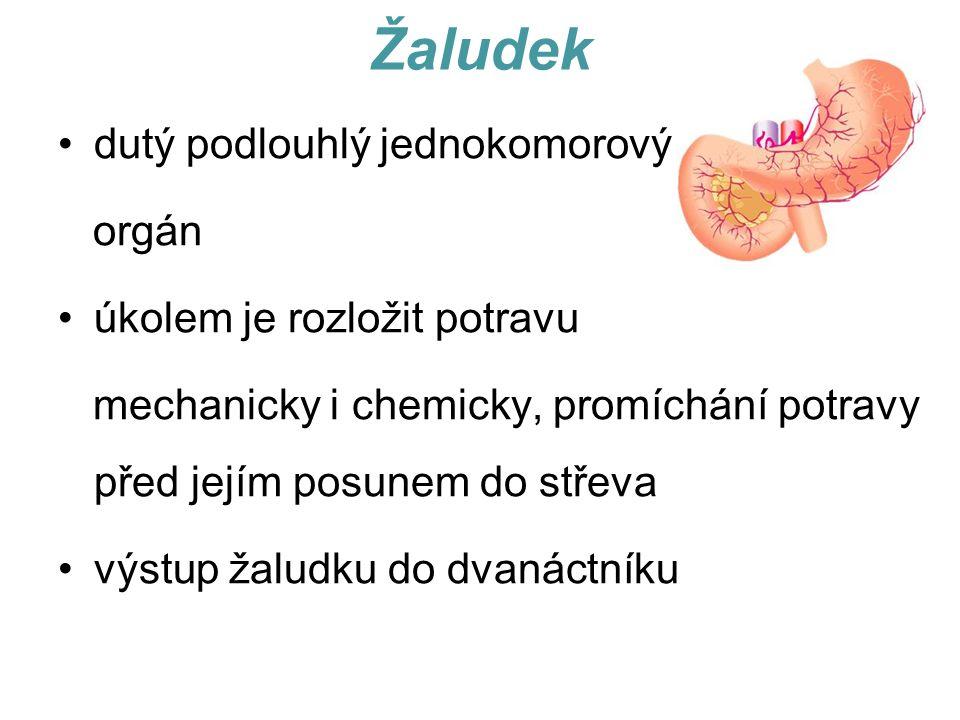 Žaludek dutý podlouhlý jednokomorový orgán úkolem je rozložit potravu mechanicky i chemicky, promíchání potravy před jejím posunem do střeva výstup žaludku do dvanáctníku