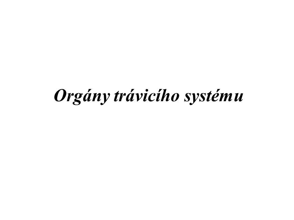 Orgány trávicího systému