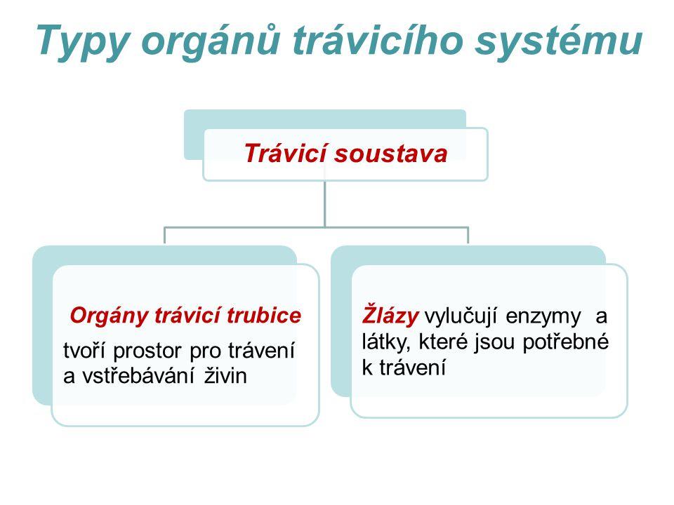 Typy orgánů trávicího systému Trávicí soustava Orgány trávicí trubice tvoří prostor pro trávení a vstřebávání živin Žlázy vylučují enzymy a látky, které jsou potřebné k trávení