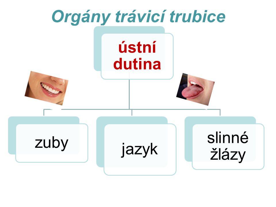 Orgány trávicí trubice ústní dutina zuby jazyk slinné žlázy