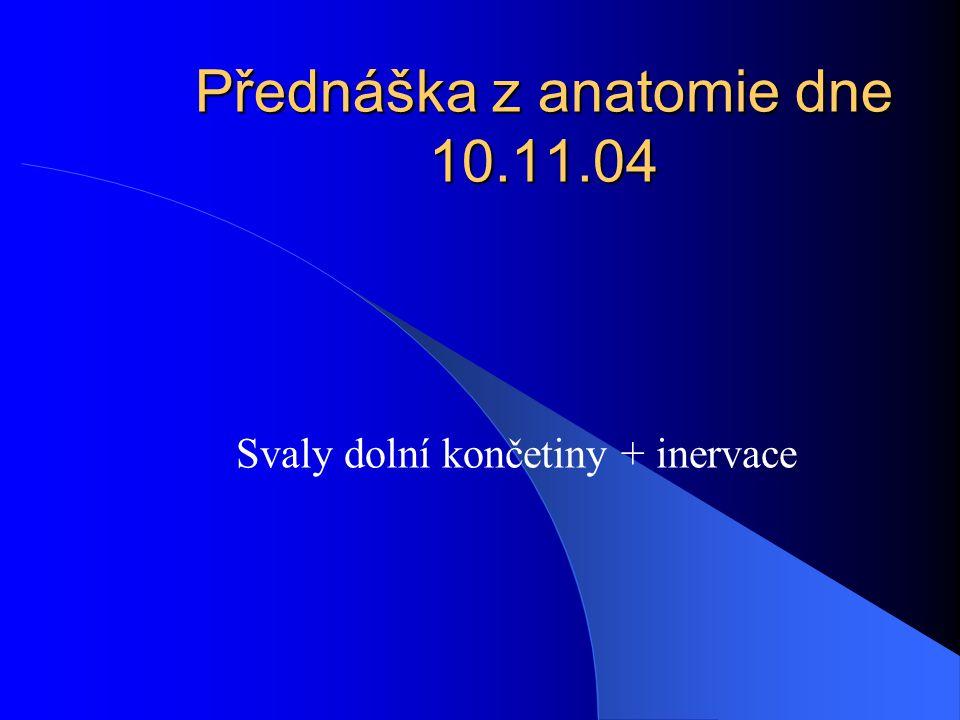 Přednáška z anatomie dne 10.11.04 Svaly dolní končetiny + inervace