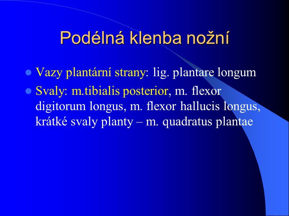 Podélná klenba nožní Vazy plantární strany: lig. plantare longum Svaly: m.tibialis posterior, m. flexor digitorum longus, m. flexor hallucis longus, k