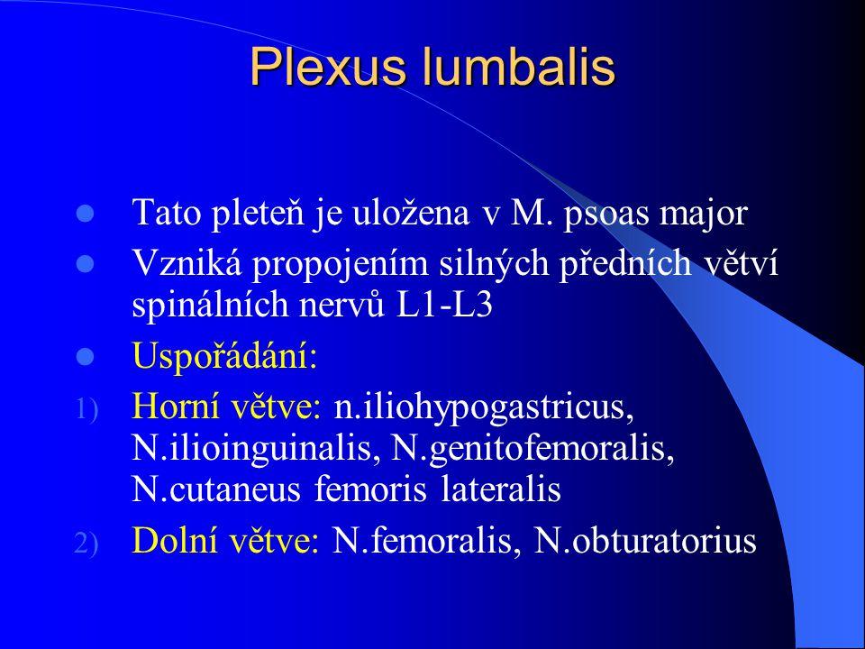 Plexus lumbalis Tato pleteň je uložena v M. psoas major Vzniká propojením silných předních větví spinálních nervů L1-L3 Uspořádání: 1) Horní větve: n.