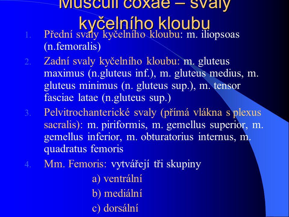 Musculi coxae – svaly kyčelního kloubu 1. Přední svaly kyčelního kloubu: m. iliopsoas (n.femoralis) 2. Zadní svaly kyčelního kloubu: m. gluteus maximu