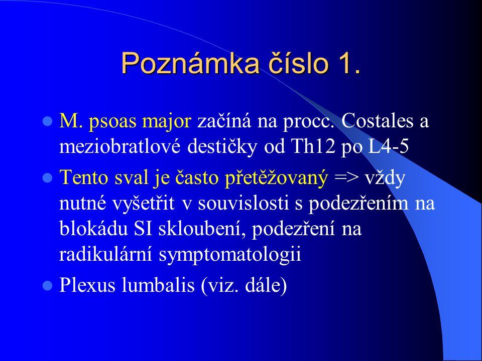 Poznámka číslo 1. M. psoas major začíná na procc. Costales a meziobratlové destičky od Th12 po L4-5 Tento sval je často přetěžovaný => vždy nutné vyše