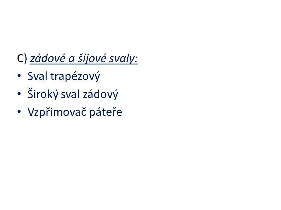 C) zádové a šíjové svaly: Sval trapézový Široký sval zádový Vzpřimovač páteře