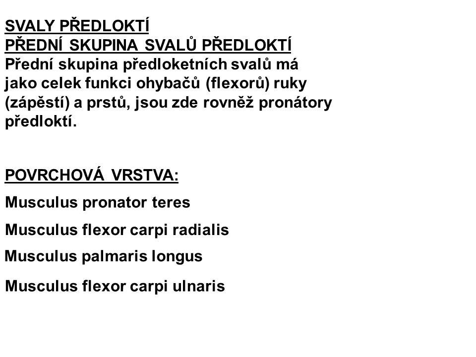 Musculus pronator teres: Z: epicondylus medialis humeri a pr.