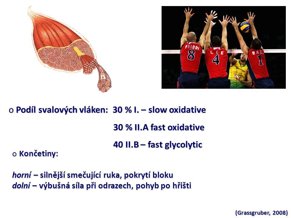 o Podíl svalových vláken: 30 % I.