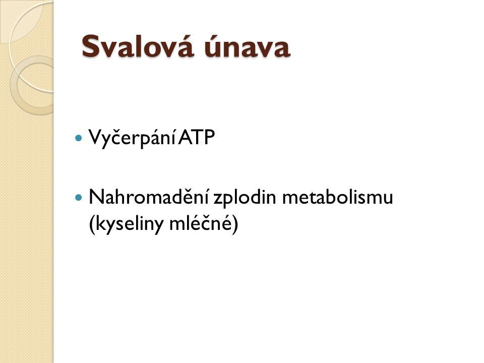 Svalová únava Vyčerpání ATP Nahromadění zplodin metabolismu (kyseliny mléčné)